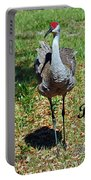 Sandhill Crane Birthday Portable Battery Charger
