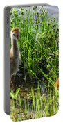 Sandhill Crane Chicks  Portable Battery Charger