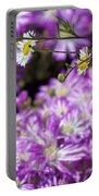 Santa Barbara Daisies In Ice Plant Portable Battery Charger