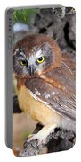 Saw-whet Owl In Conifers Portable Battery Charger