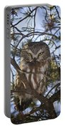 Saw Whet Owl Portable Battery Charger