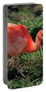 Scarlet Ibis Hybrid Portable Battery Charger