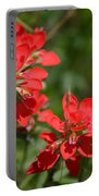 Scarlet Paintbrush. Texas Wildflowers. Castilleja_indivisa Portable Battery Charger