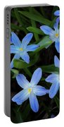 Scilla Flowers In The Morning Portable Battery Charger