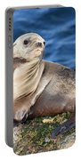 Sea Lion Pup Portable Battery Charger