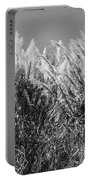 Sea Oats In The Glades Portable Battery Charger