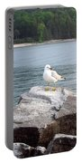 Seagull Awaits Portable Battery Charger