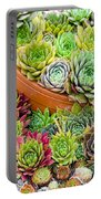 Sempervivum Or House Leeks Mixed  Portable Battery Charger