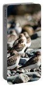 Shorebird Rest Time Portable Battery Charger
