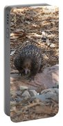 Short-beaked Echidna Portable Battery Charger