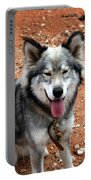 Siberian Husky With Blue And Brown Eyes Portable Battery Charger