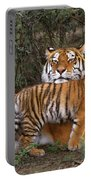 Siberian Tiger Cub Guarding Mom Wildlife Rescue Portable Battery Charger