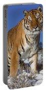 Siberian Tiger No. 1 Portable Battery Charger