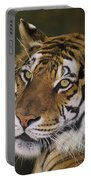 Siberian Tiger Portrait Endangered Species Wildlife Rescue Portable Battery Charger
