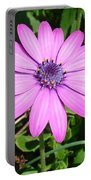 Single Pink African Daisy Against Green Foliage Portable Battery Charger