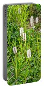 Sitka Burnet And Tall Fireweed In Katmai National Preserve-ak Portable Battery Charger