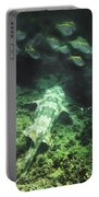 Sleeping Wobbegong And School Of Fish Portable Battery Charger