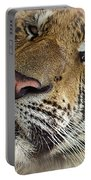 Sleepy Tiger Portrait Portable Battery Charger