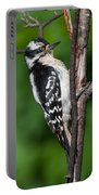 Sleepy Woodpecker Portable Battery Charger