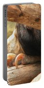 Sloth Bear Portable Battery Charger