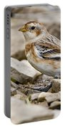 Snow Bunting Pictures 43 Portable Battery Charger