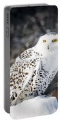 Snowy Owl Cold Stare Portable Battery Charger