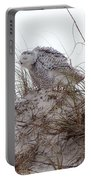 Snowy Owl In Florida 13 Portable Battery Charger