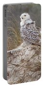 Snowy Owl In Florida 14 Portable Battery Charger