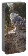 Snowy Owl In Florida 15 Portable Battery Charger