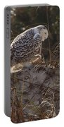 Snowy Owl In Florida 16 Portable Battery Charger