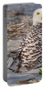 Snowy Owl In Florida 24 Portable Battery Charger