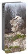 Snowy Owl In Florida 4 Portable Battery Charger