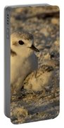 Snowy Plover Transforms Into A Spiderbird 4 Portable Battery Charger