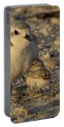 Snowy Plover Transforms Into A Spiderbird 5 Portable Battery Charger