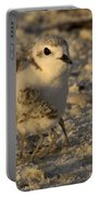 Snowy Plover Transforms Into A Spiderbird 6 Portable Battery Charger