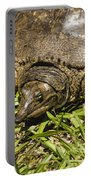 Florida Soft Shelled Turtle - Apalone Ferox Portable Battery Charger
