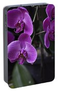 Some Very Beautiful Purple Colored Orchid Flowers Inside The Jurong Bird Park Portable Battery Charger