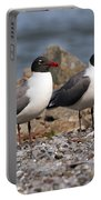 Mr. And Mrs. Laughing Gull  Portable Battery Charger