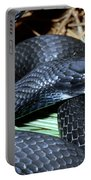 Southern Black Racer Coluber Priapus Portable Battery Charger
