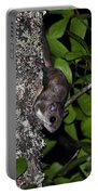 Southern Flying Squirrel Portable Battery Charger