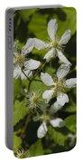 Southern Sawtooth Highbush Blackberry Blossoms - Rubus Argutus Portable Battery Charger