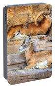 Spanish Ibex Portable Battery Charger