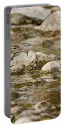 Spotted Sandpiper Pictures 36 Portable Battery Charger