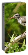 Spotted Sandpiper Pictures 48 Portable Battery Charger