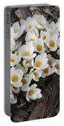 Springtime Abundance - A Bouquet Of Pure White Crocuses Portable Battery Charger