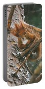 Squirrel In A Tree Portable Battery Charger