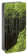 Stand Of Birch Trees New Growth Spring Rich Green Leaves Portable Battery Charger