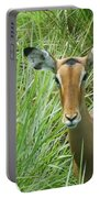 Standing In The Grass Impala Antelope  Portable Battery Charger