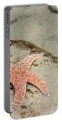 Starfish Underwater Portable Battery Charger