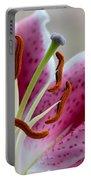 Stargazer Lily Portable Battery Charger by Randy Walton